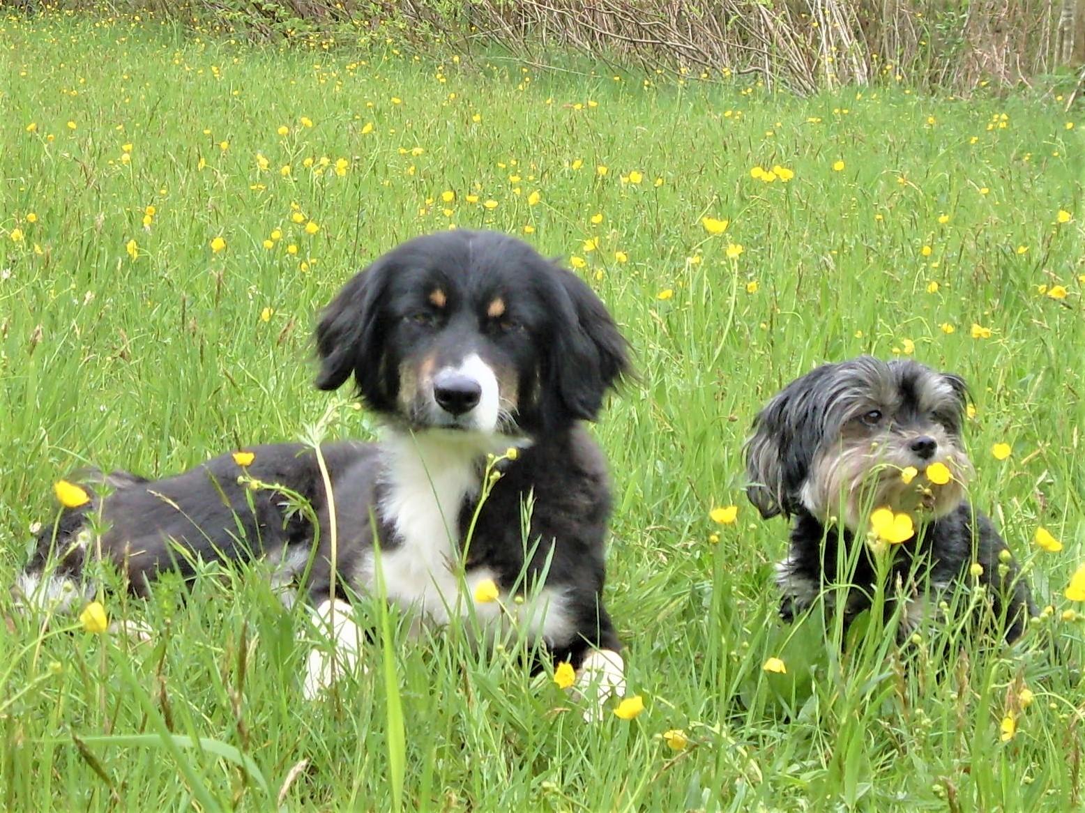 Zeckenmittel für Hunde in Wiesen